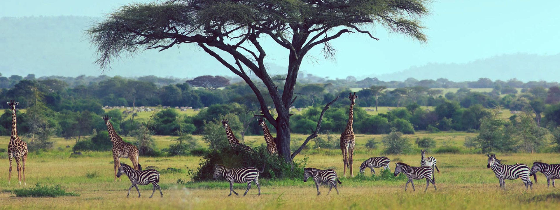 Africa's Smartest Safari Trends – And Biggest Threats